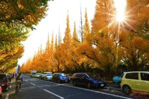 โตเกียว (ภูมิภาคคันโต) ช่วงเวลา : กลางเดือนพฤศจิกายน - ปลายเดือนพฤศจิกายน
