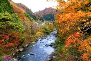 ใบไม้เปลี่ยนสีทอดยาวตามแม่น้ำสวยงามค่ะ