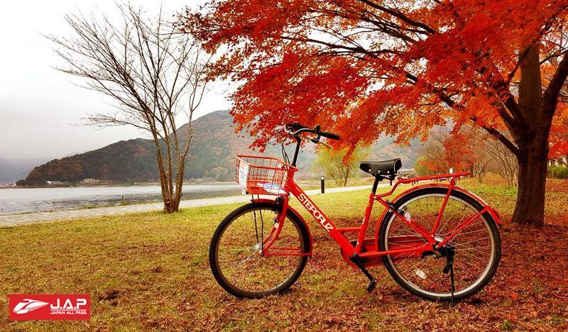 ฤดูใบไม้ร่วง (ช่วงระหว่างเดือนตุลาคม – เดือนธันวาคม)
