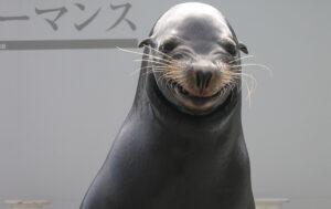 ขอขอบคุณภาพจาก Kamogawa Sea World
