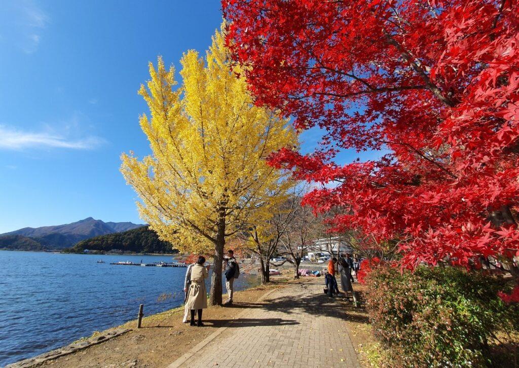 Kawaguchiko Autumn 2019 4 1