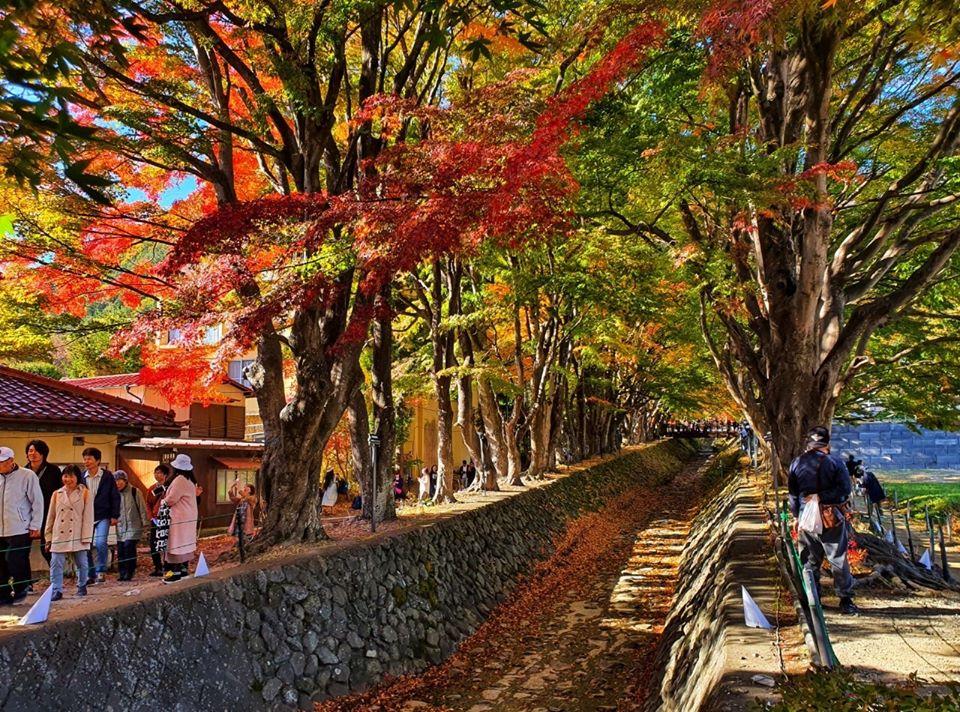 Kawaguchiko Autumn 2019 6