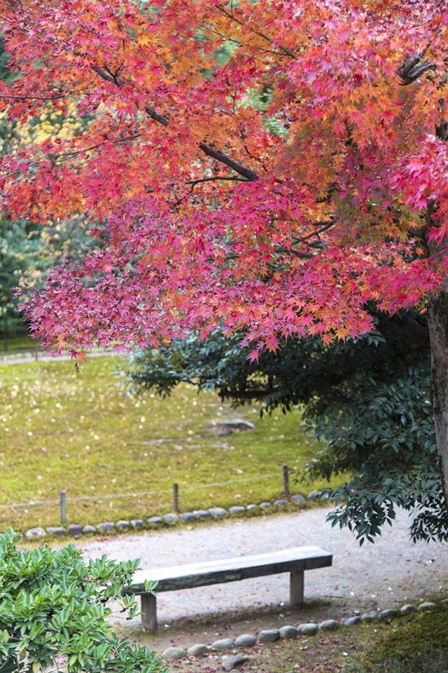 Kenrokuen Garden 03