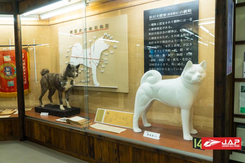 Akita Dog Museum1 1