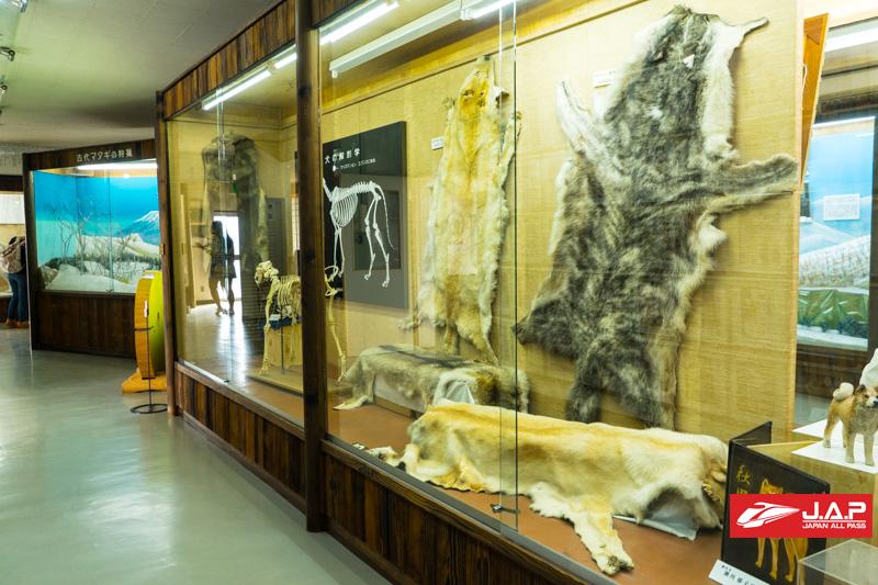 Akita Dog Museum2