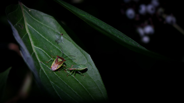 insects green leaf 181624 2455